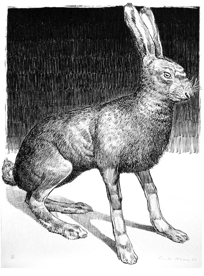 Lièvre noir et blanc. Lithographie 20 ex. 66 x 50 cm, 2011