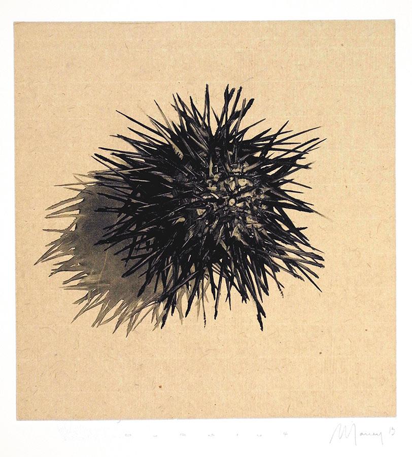 Oursin 3. Monotype, 21 x 20 cm, 2013