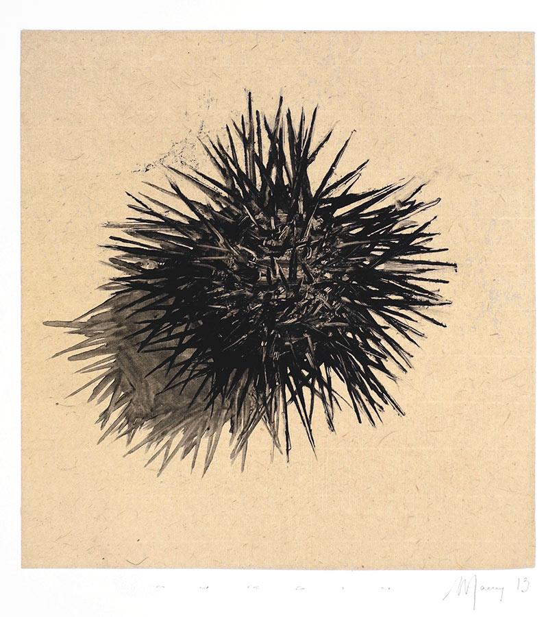 Oursin 5. Monotype, 21 x 20 cm, 2013
