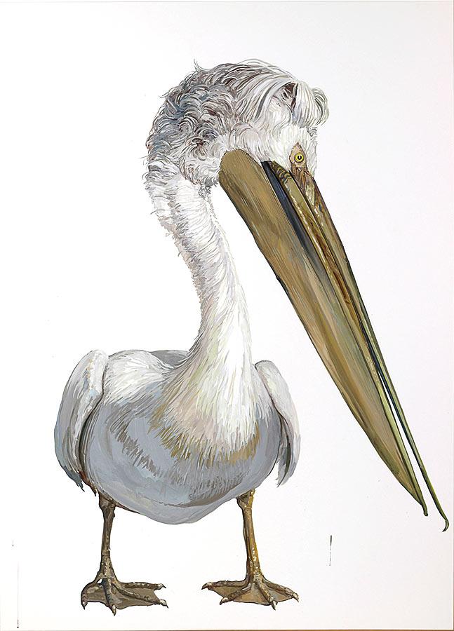 Pelican 2. Gouache, 100 x 75, 2016